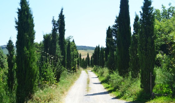 cypresstrees